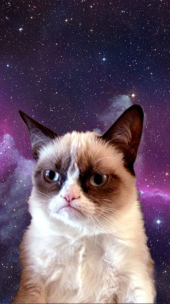 Grumpy Cat in Space