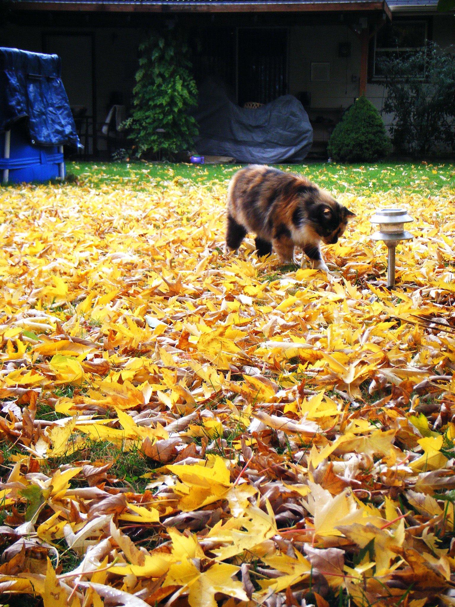 Leave no leaf unturned. Source: Flickr user McD22