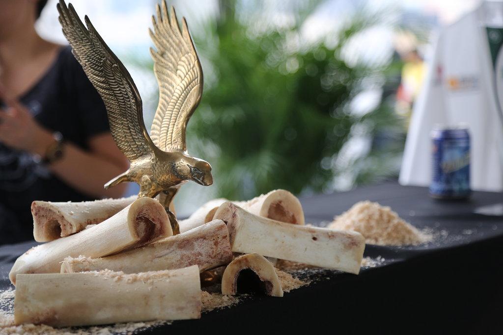 Bone Marrow Display