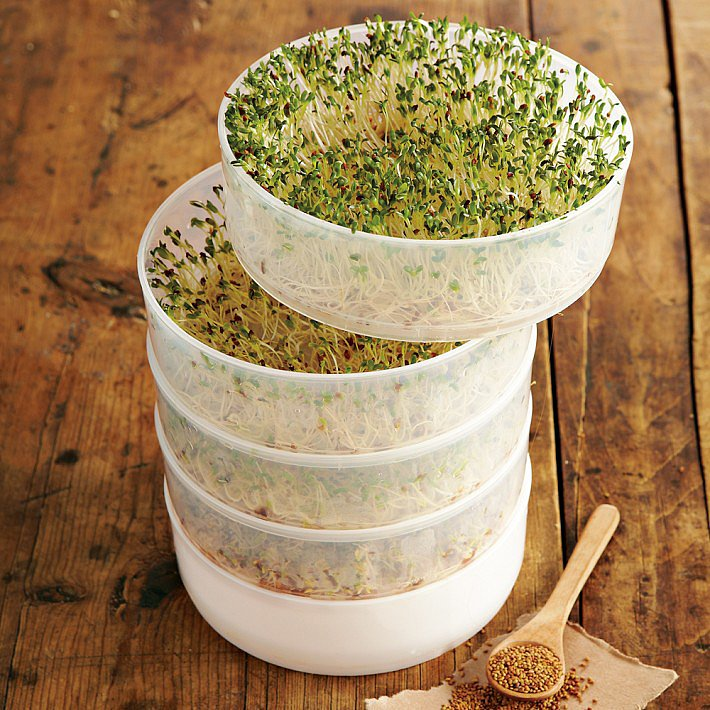 Grow Your Own Sprouts Kit
