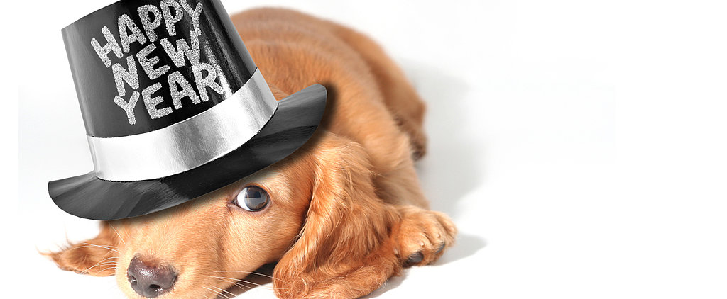 Tips For a Pet-Safe New Year's Eve Party!