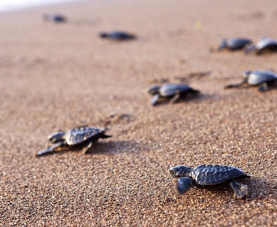 Watch Baby Turtles Hatch