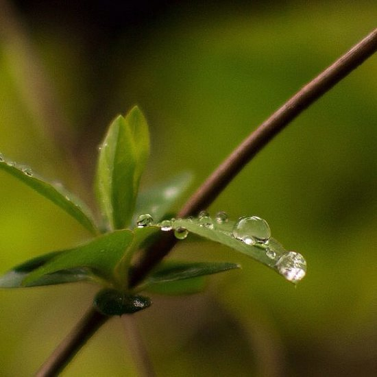 Water Droplet Picture