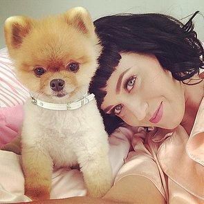 Katy Perry Bob Haircut 2014