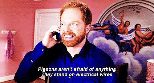 Pigeons Don't Scare You