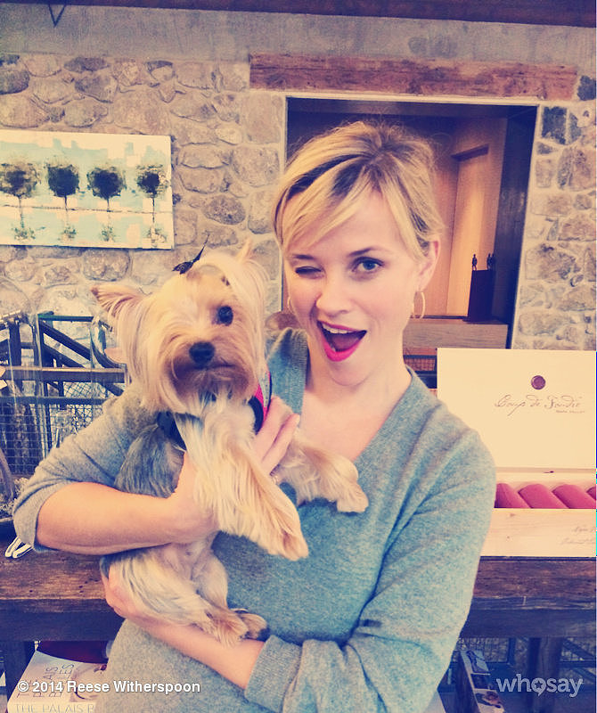 Reese Witherspoon found a new friend in Riley the Yorkie while hanging out with Drew Barrymore. Source: Reese Witherspoon on WhoSay