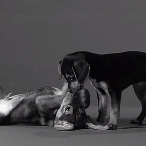 "Jimmy Fallon's ""First Kiss"" Video Parody With Puppies"