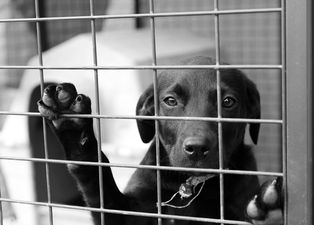 Myth: Dogs Are in Shelters Because They Were Not Good Pets