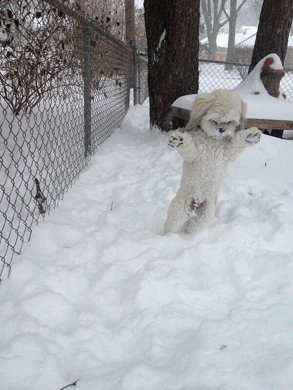 """Minnesota Yeti Caught on Film"" Source: Reddit user StewPaddasso"
