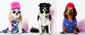 Too Cute: Dogs Dressed as Street Style Stars