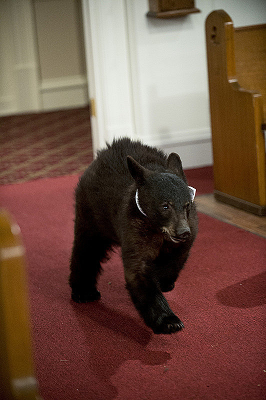 The ring bear!
