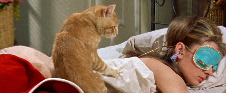 12 Signs You're a Cat Lady and Purrfectly Happy With It