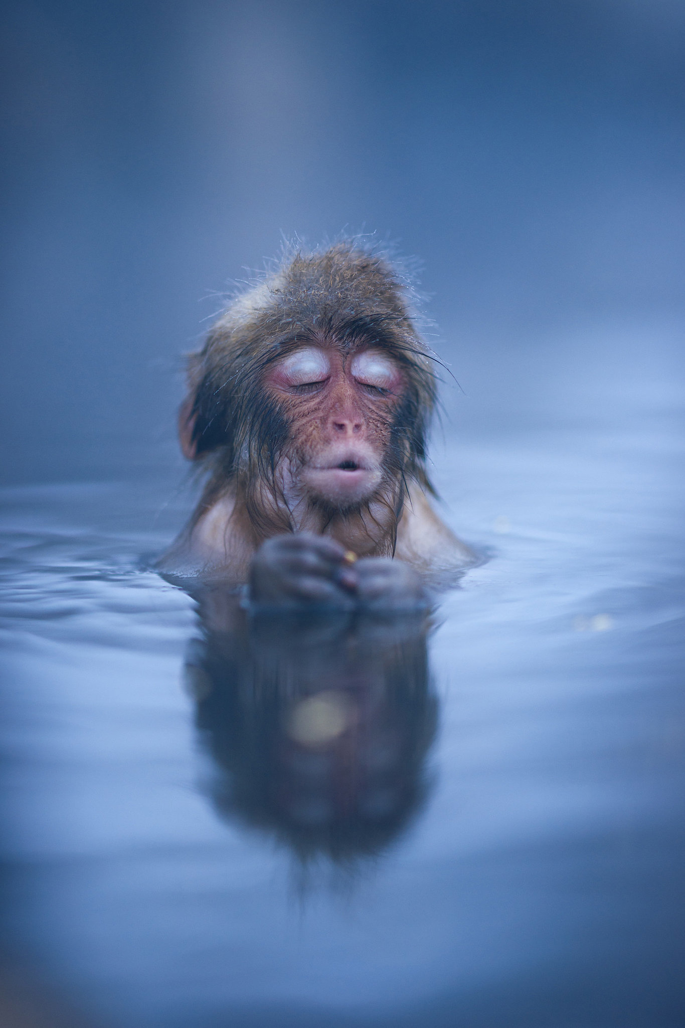 """""""A monkey relaxing in a hot spring in Japan's Nagano Prefecture."""" Source: Reddit user HesterLee via Imgur"""