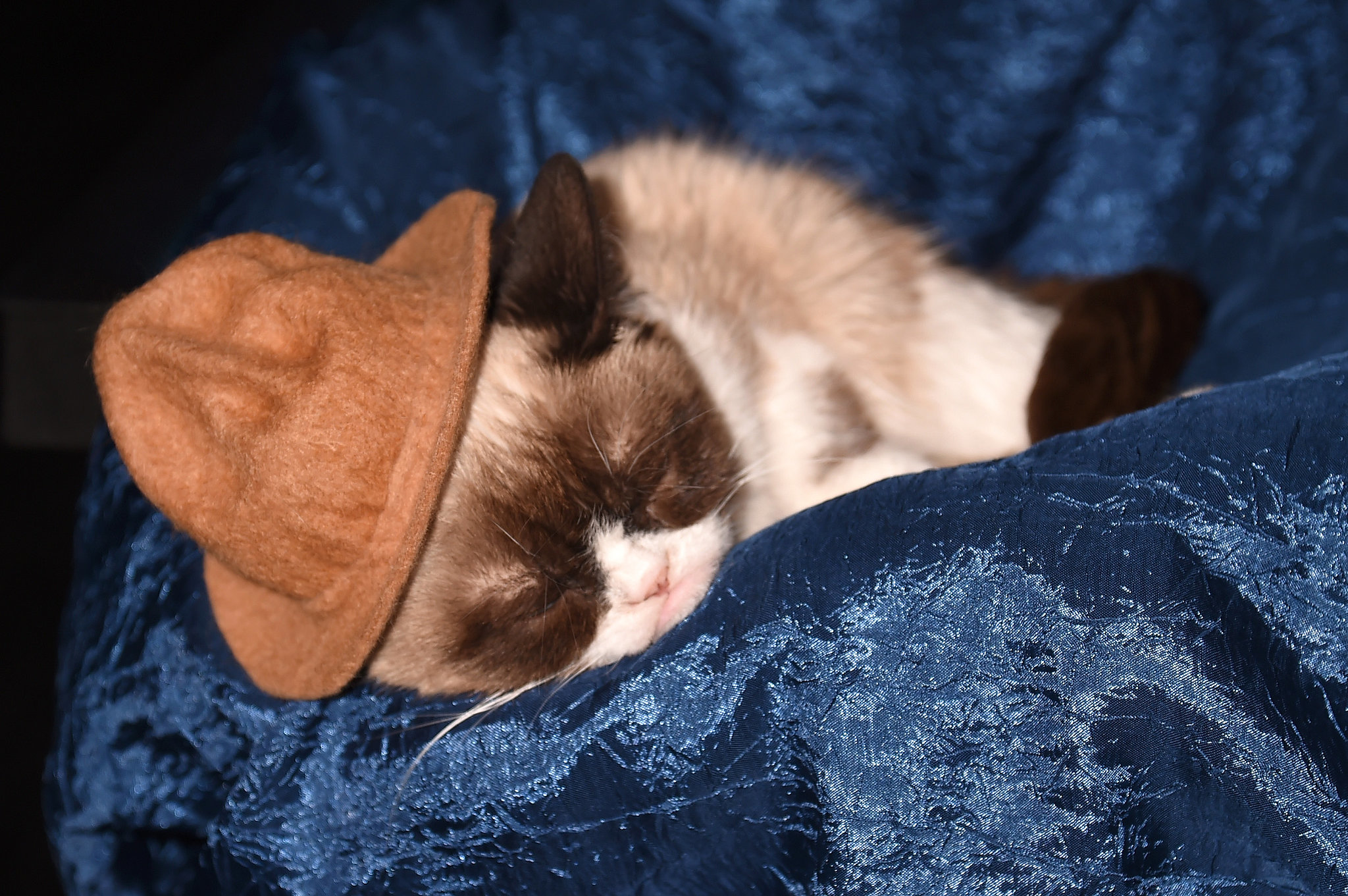 Most Apathetic Guest in a Sleeping Role: Grumpy Cat
