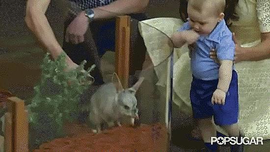 Look! A Bilby Wiggles