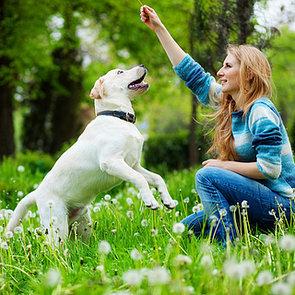 Australia Dog Training Hand Signs