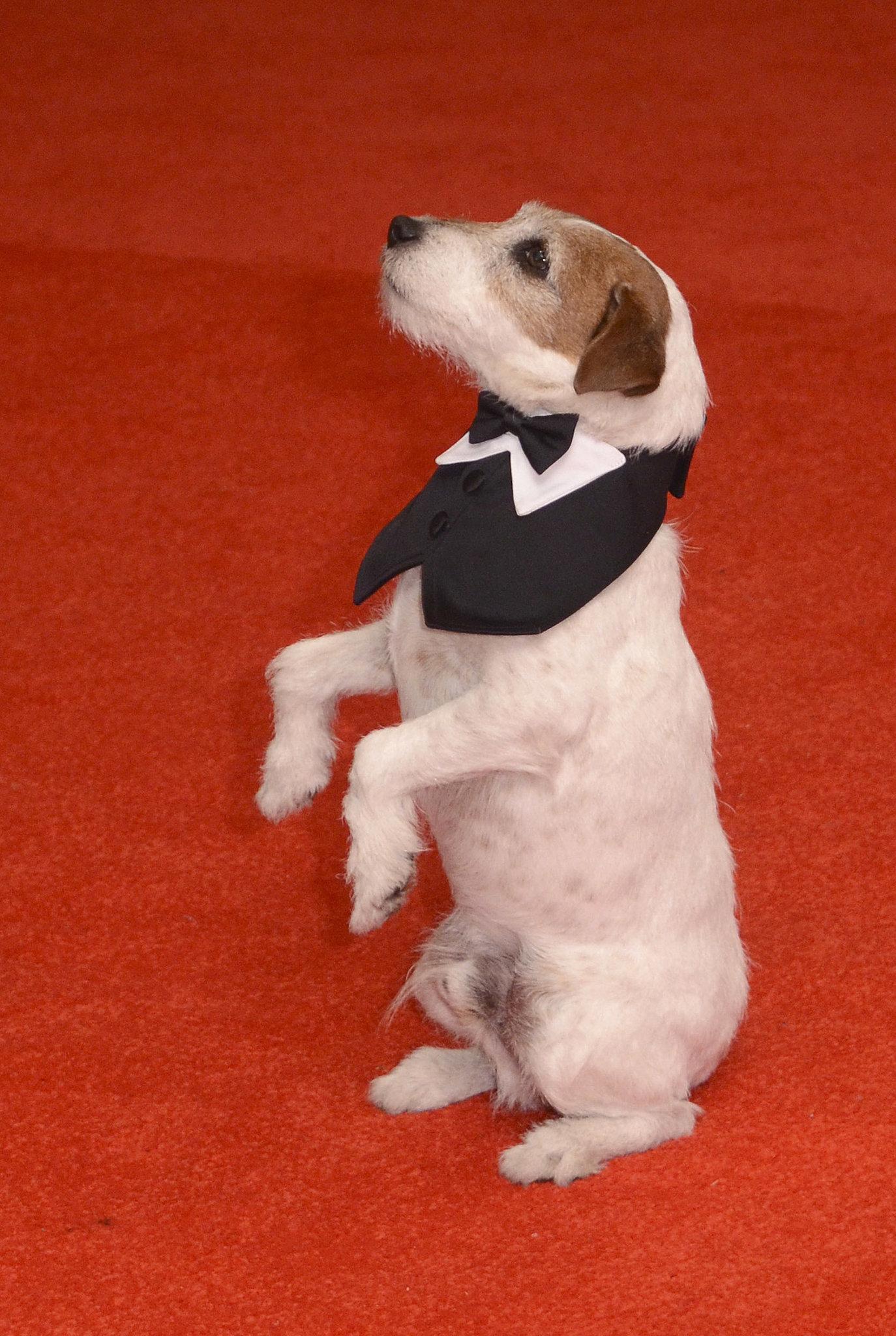 No. 9: Uggie the Dog in 2012
