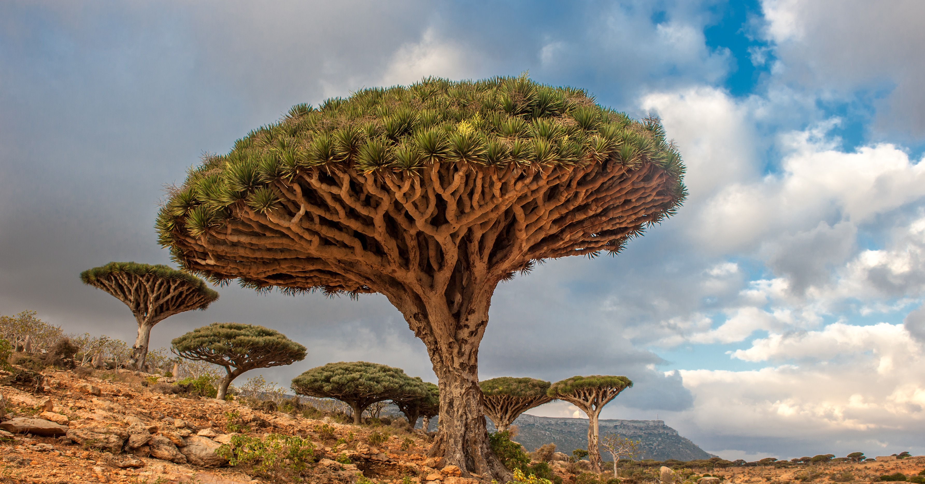 Dragon Trees Yemen 83 Unreal Places You Thought Only
