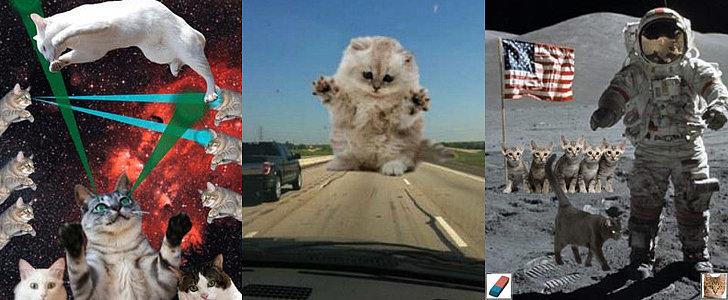 Cat Power: 5 Apps That Add Feline Photobombs