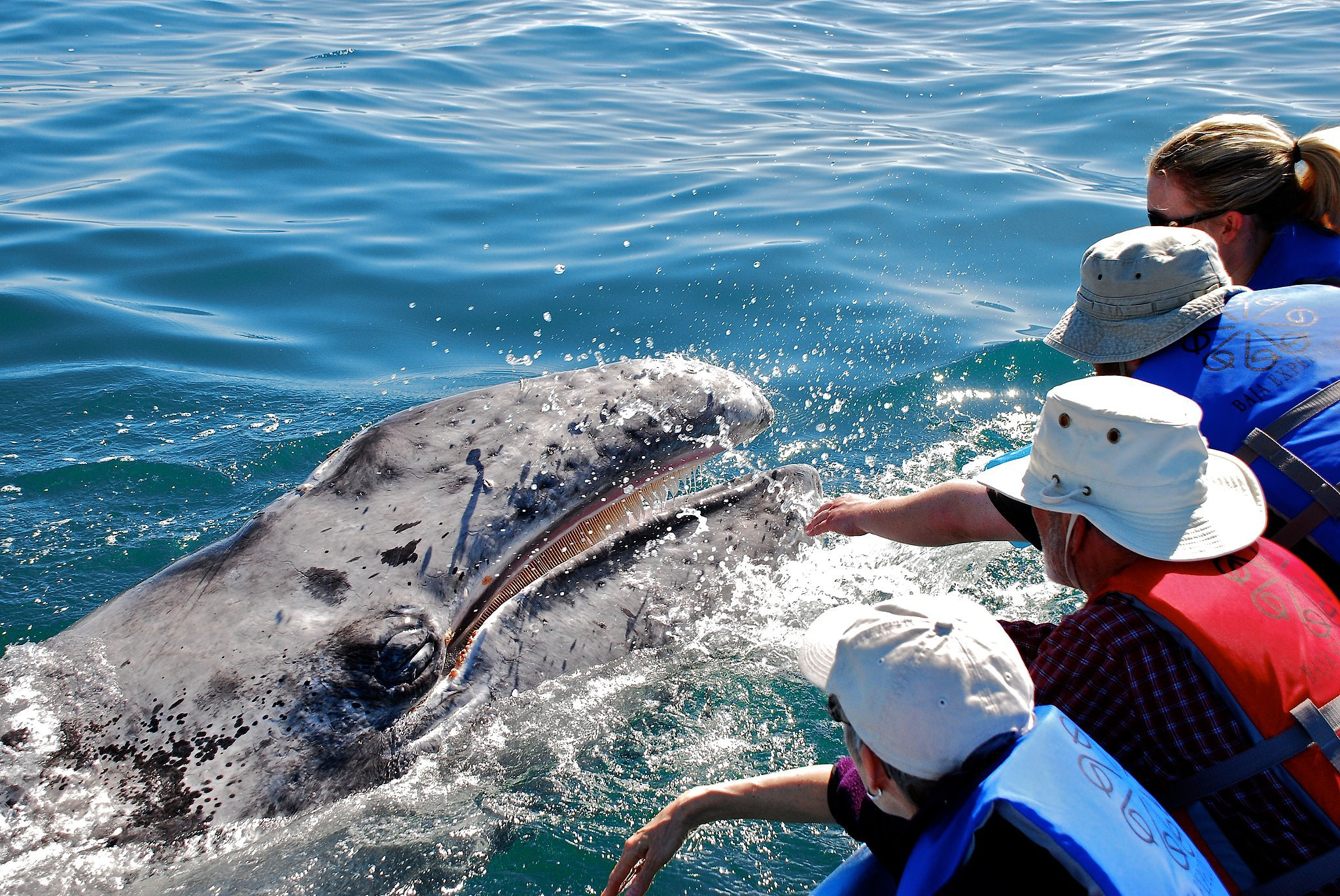 Tickle Whales in Mexico
