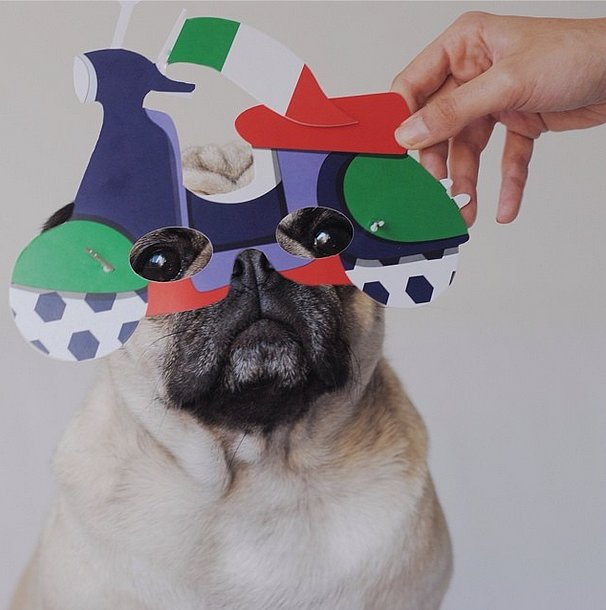 Why the long face? Carlotta the Pug doesn't seem too thrilled to be cheering on Italy. Source: Instagram user littlefurrymonster