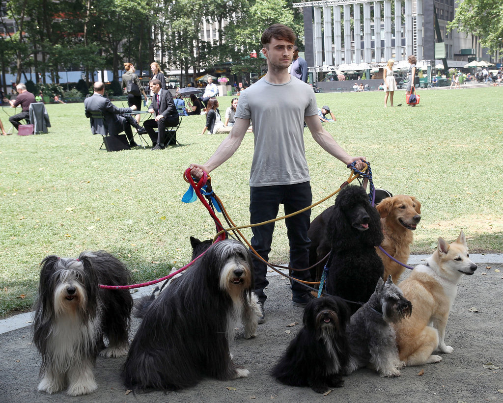 Daniel Radcliffe walked a bunch of dogs on the set of Trainwreck on Monday in NYC.