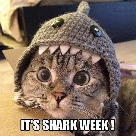 Cat Demands Shark Week Right Meow