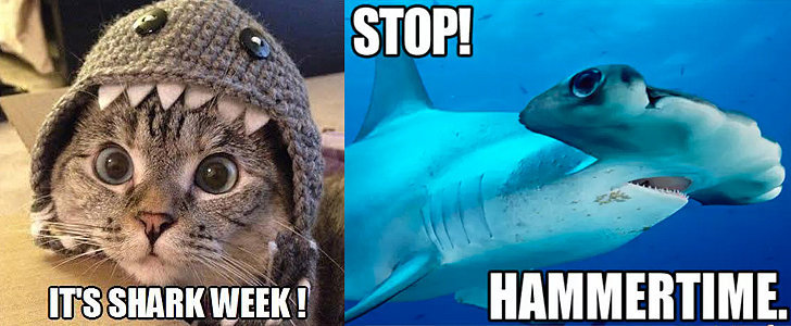 Fin Fest! The Internet's Funniest Shark Memes