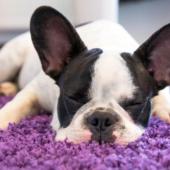 Top 10 Pet Hair Vacuums For Carpet and Hardwood