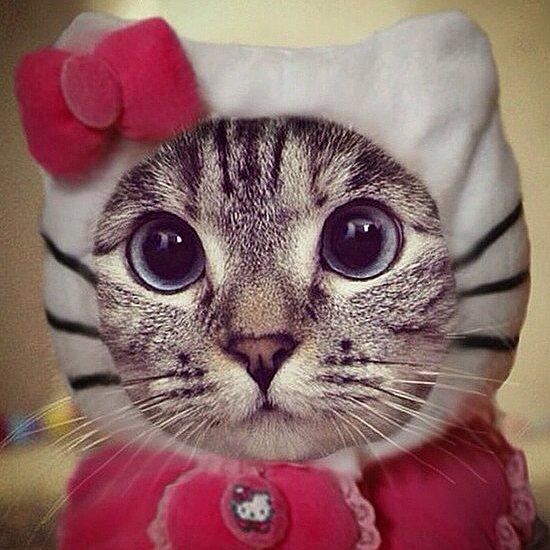 Funny Cat Costumes