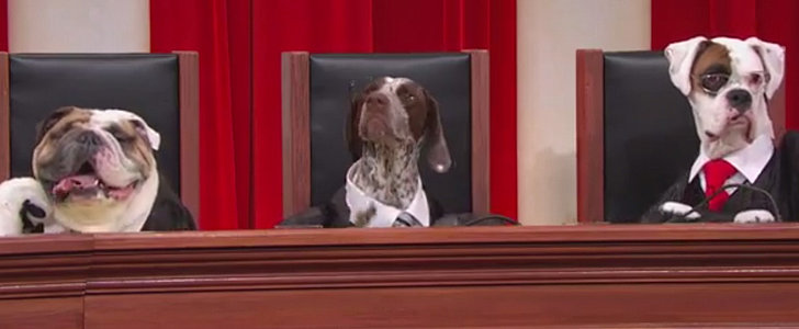 That Time a Bunch of Dogs Reenacted the Supreme Court