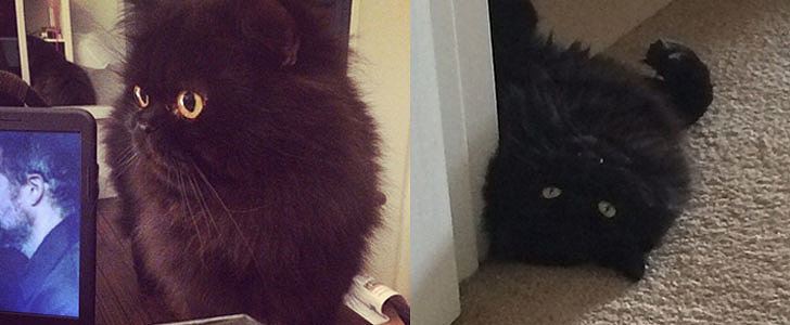 13 Not-So-Scary Black Cats