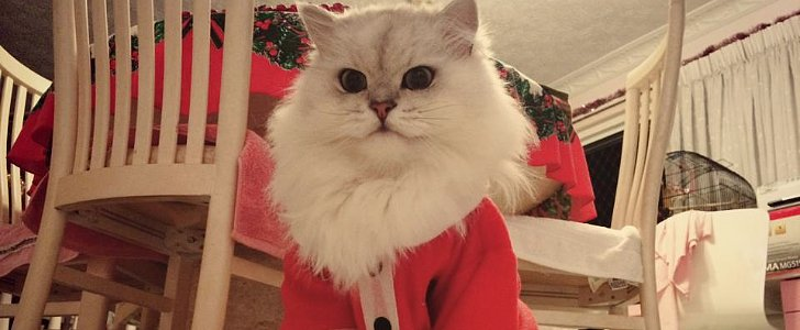 25 Glorious Cats That Make the Internet a Better Place