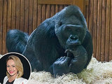 Hayden Panettiere Builds a New Home for Tony the Gorilla at the Kiev Zoo