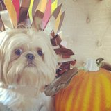 A Guide to Thanksgiving Etiquette for Your Dog