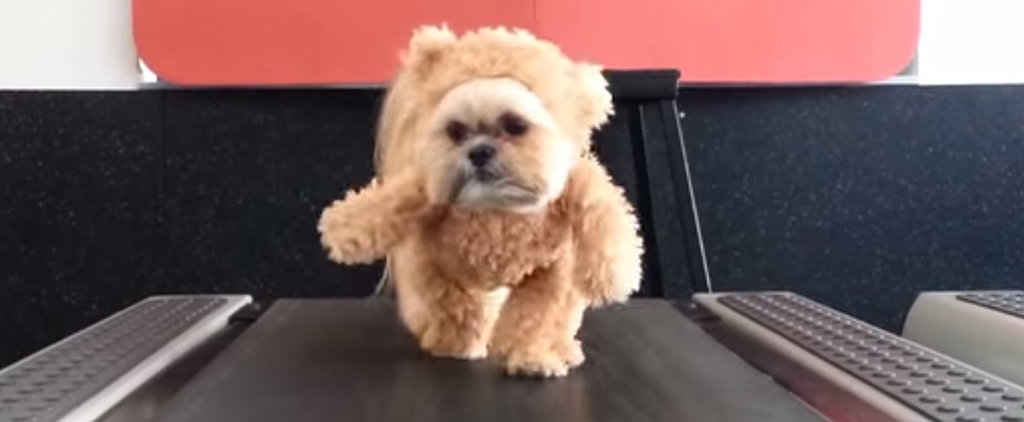 Dog Dressed as Teddy Bear on a Treadmill Is the Best Thing You'll See Today