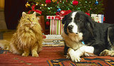 10 Ways to Prepare Pets for Holiday Parties