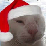 The 12 Cats of Christmas: Mr. No Ears, a Feral Cat in Portugal Who Has Staying Power