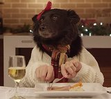 Video: Freshpet Commercial Reenacts a Typical Holiday Dinner With Dogs and A Cat
