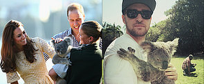 Aw, So Cuddly! 31 Pictures of Celebrities With Koalas