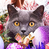 How to Make It Work When Your Kids Want a Cat for Christmas