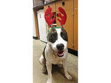 Adopt Me! Sweetheart Fiona Is a Shelter Favorite