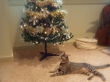 Oskar the Blind Cat Helps Decorate a Christmas Tree