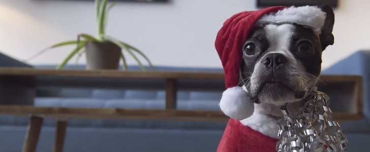 This Dog Is Not Impressed by His Robot Vacuum Sleigh