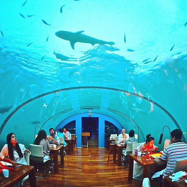 eat at an underwater restaurant the ultimate dating. Black Bedroom Furniture Sets. Home Design Ideas