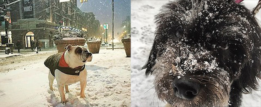 These Dogs Aren't Afraid of a Little Snow