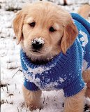 15 Adorable, Snowy Animal Pictures to Make You Feel Better About Juno