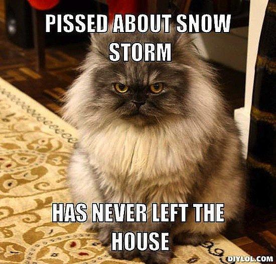 The Most Brr-illiant Snowstorm Memes