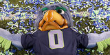 5 Things You Didn't Know About The Seattle Seahawks