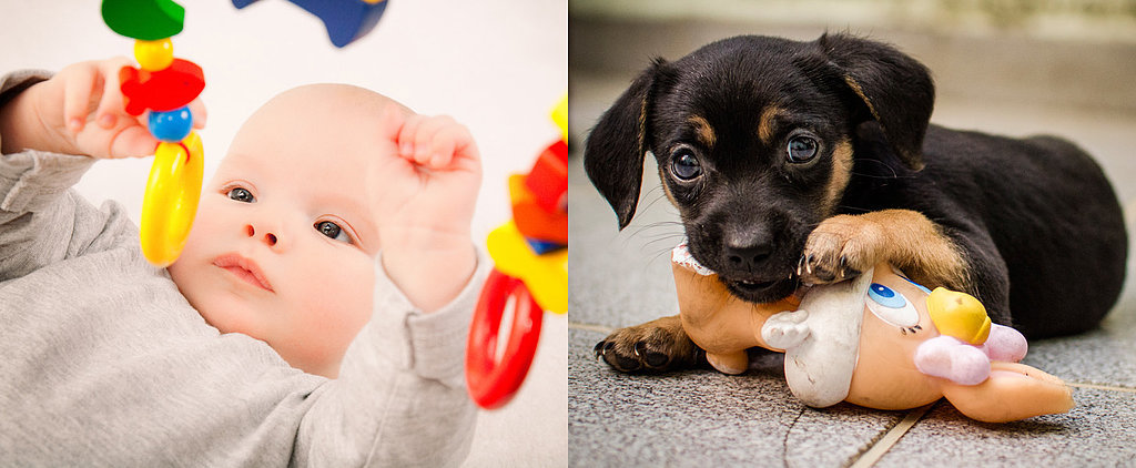Let's All Be Honest: Raising a Baby Isn't That Different From Puppy Training